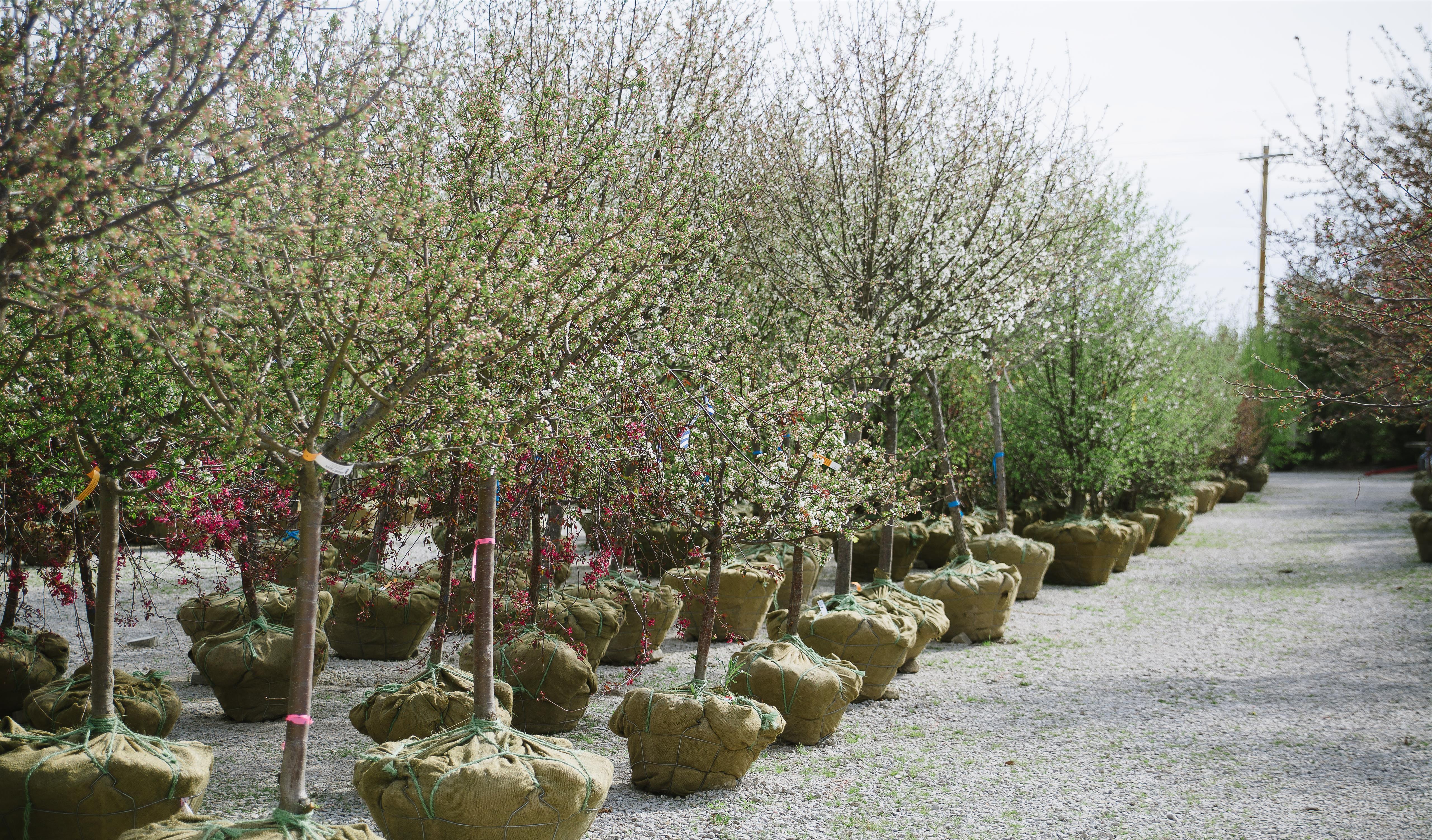 Fairy_Garden_Minitures_Barn