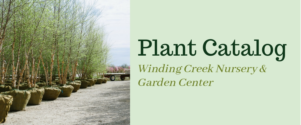 Winding_Creek Nursery_Stock_Catalog