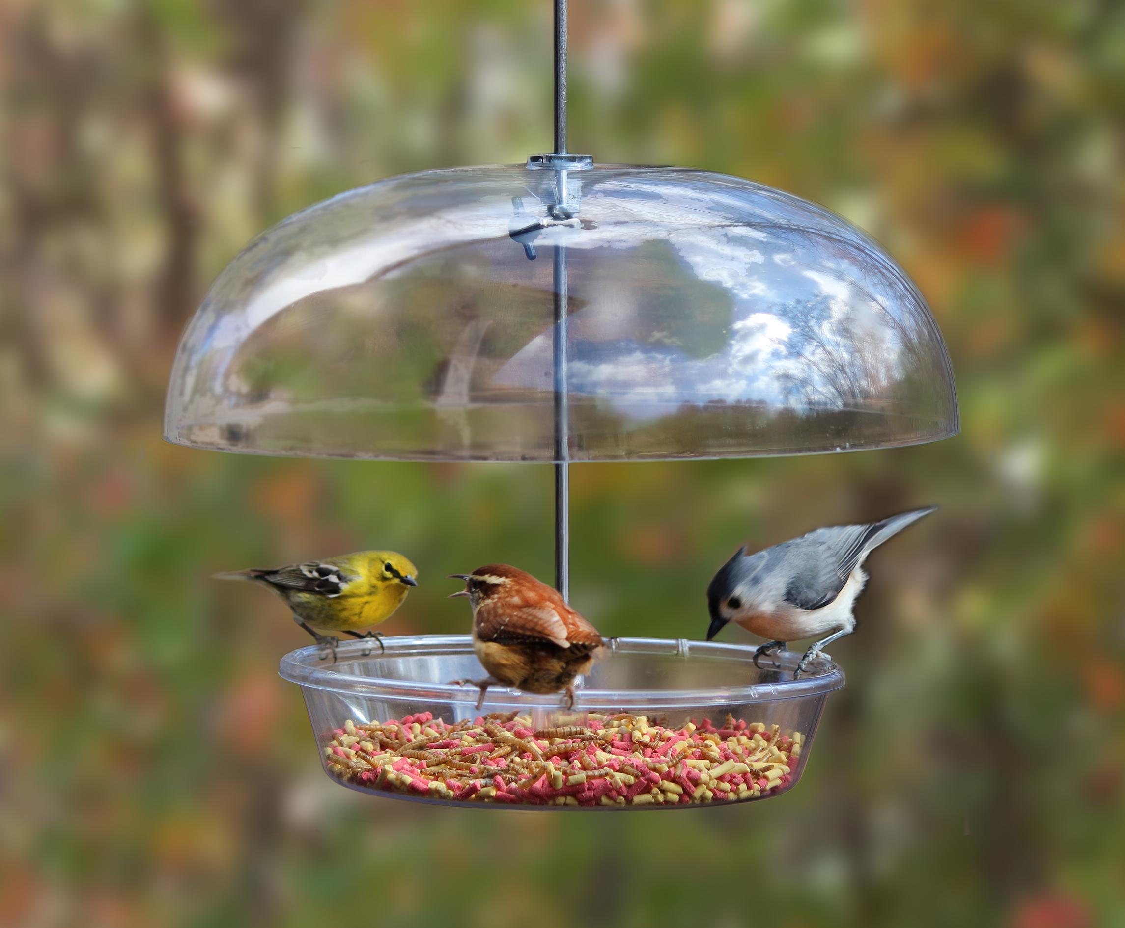 bird feeder, Cole's Wild Bird Products, Bountiful Bowl, new, dome feeder