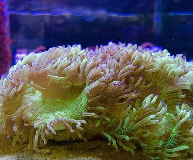 coral, elegance coral