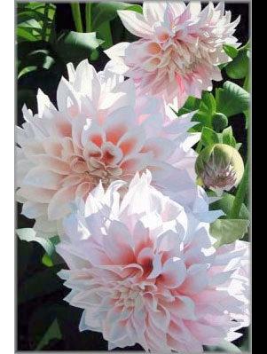 Brian Davis_American artist_painter of flowers_ orchids_floral art_oil painter_painter of light_illuminating flowers_roses_