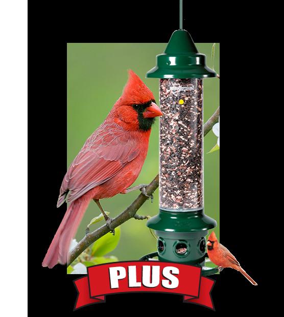 Bird seed, bird feed, and bird feeders large capacity, squirrel proof