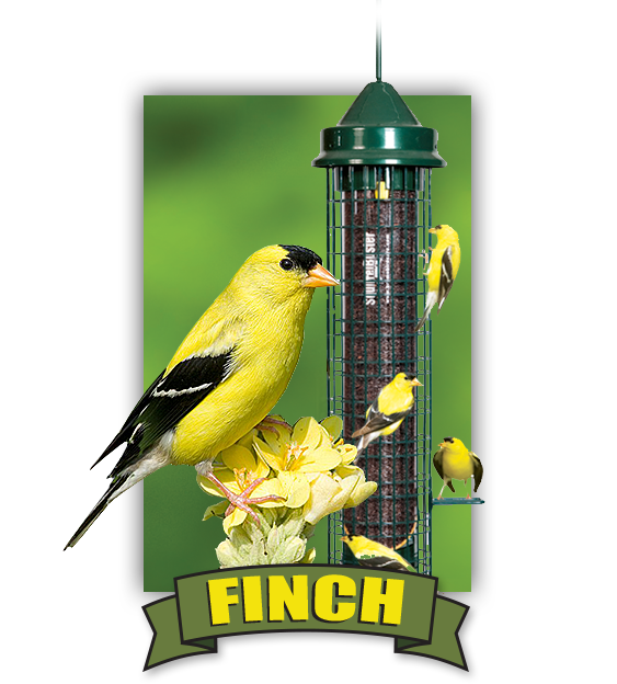 Bird seed, bird feed, and bird feeders for Finches available at Bird Watcher Supply Company