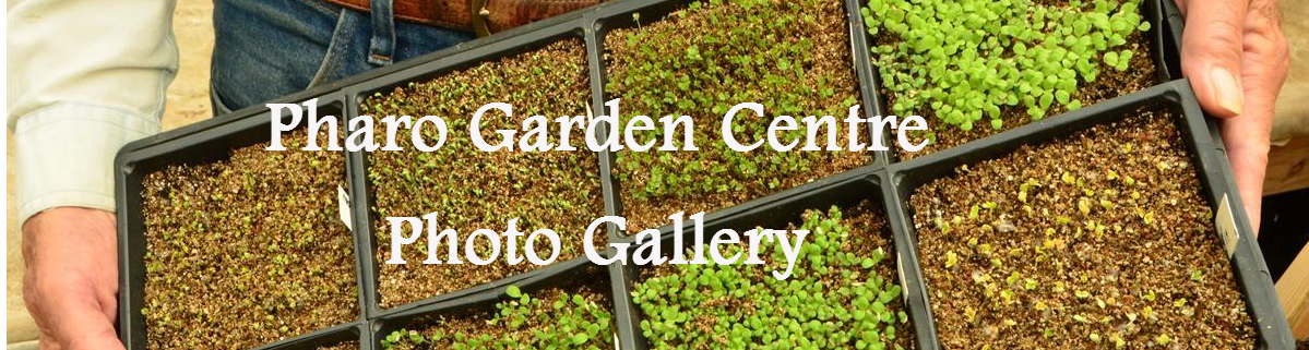 Pharo Garden Centre photo gallery