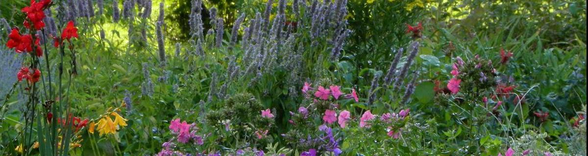 special gardens Pharo Garden Centre