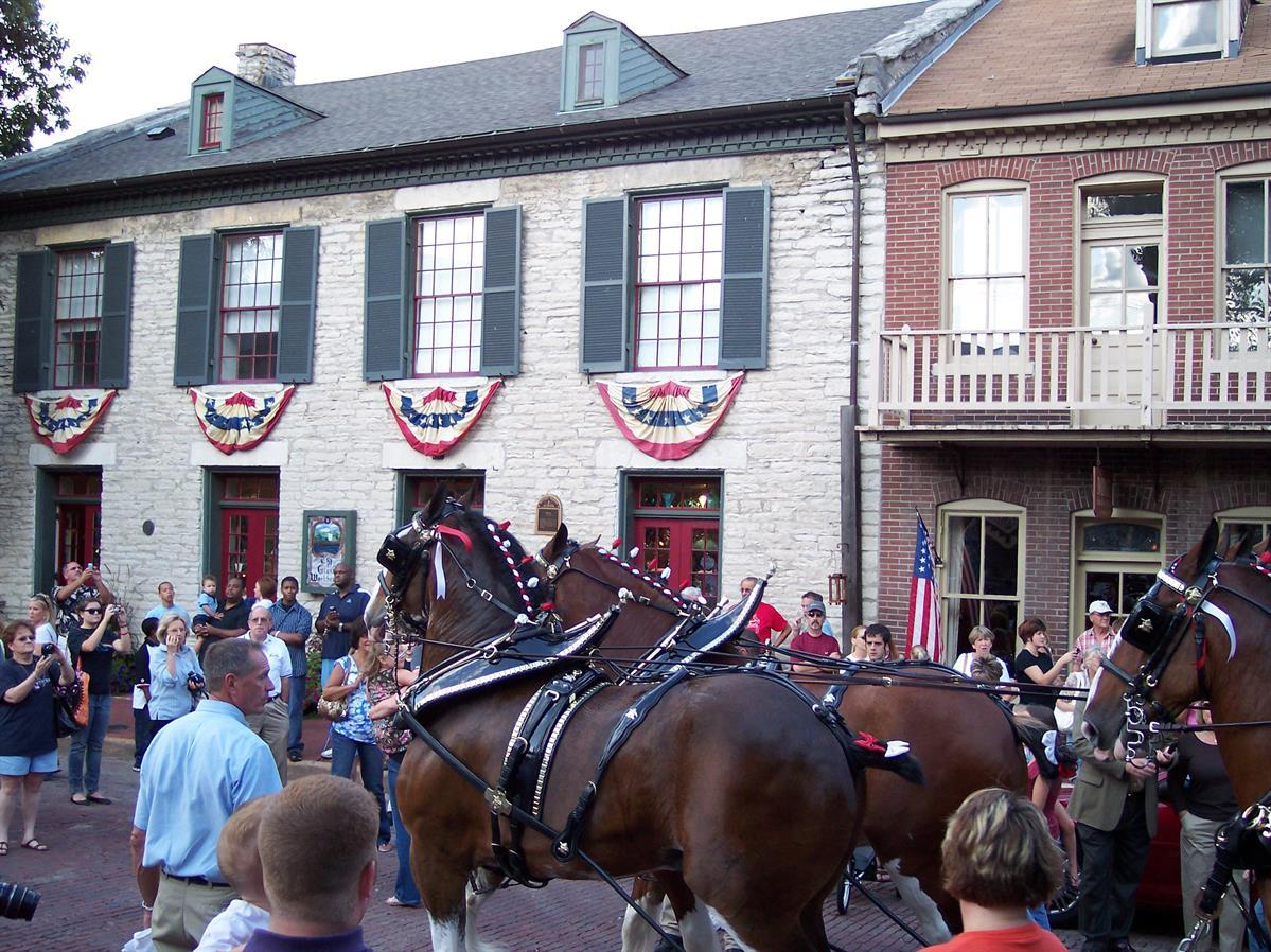 Budweiser Clydesdales on Historic Main Street, St. Charles, MO